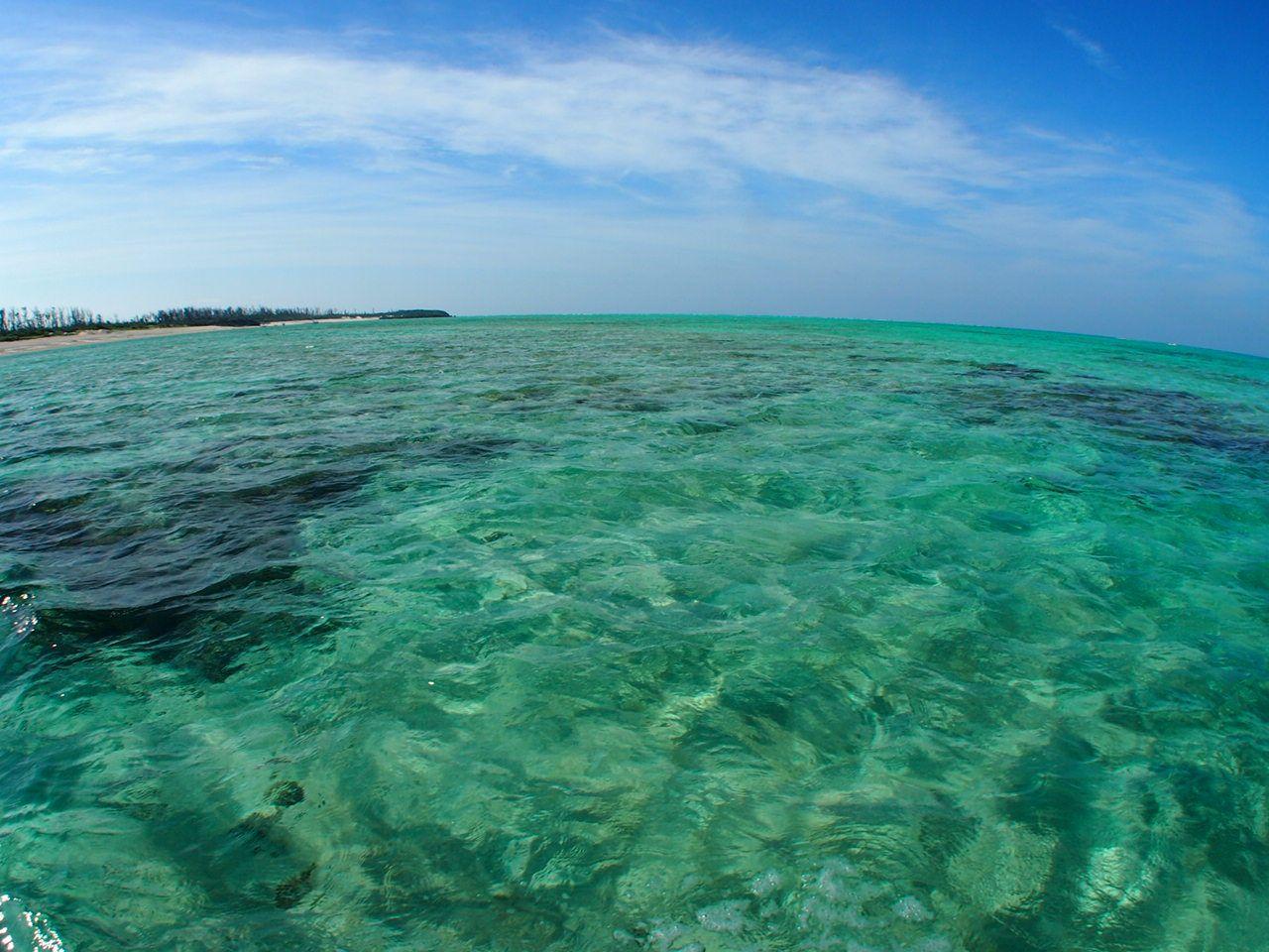 与論ブルーの海を眺めながらグラスボートで百合が浜へ!