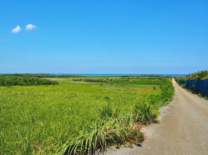 津堅島で島あるきを楽しもう!