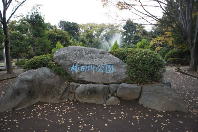 柿田川公園へ