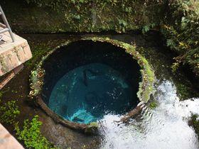 東洋一の湧き水、柿田川公園