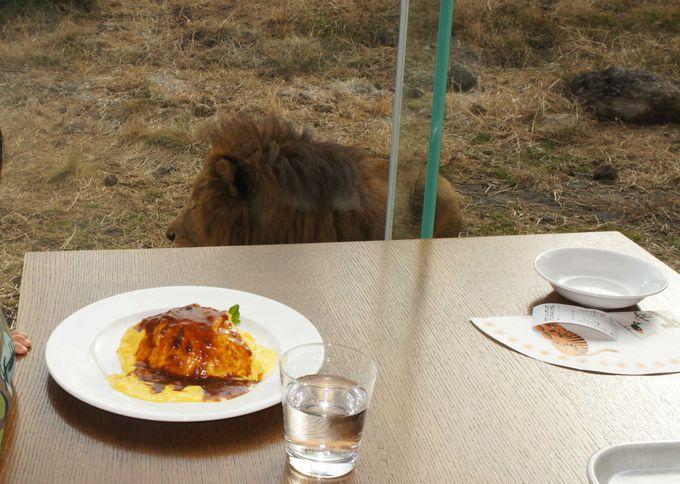 食事の時間も動物たちに感動!!