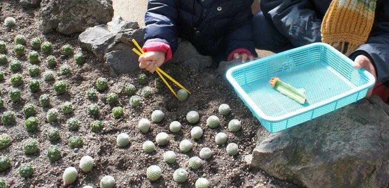 世界に一つだけのマイサボテンを作りに伊豆シャボテン公園へ