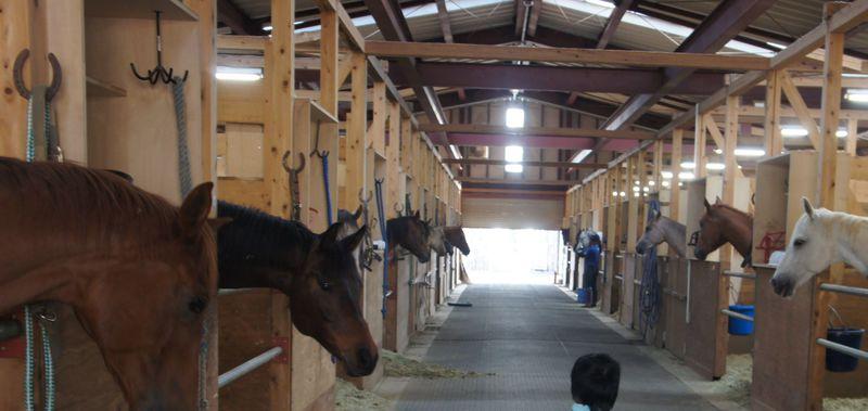伊豆ホース・カントリー「パノラマホテル」で乗馬体験!