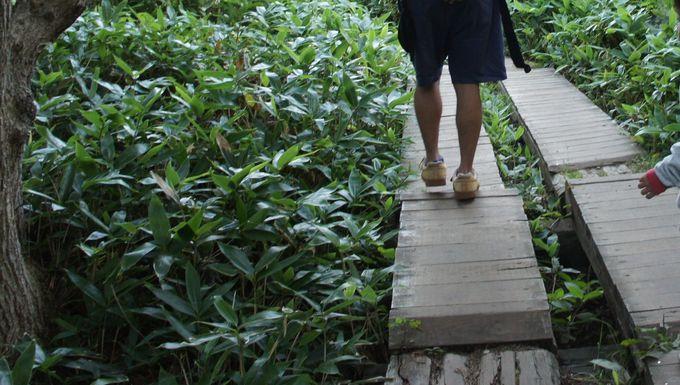 地上遊歩道を歩く