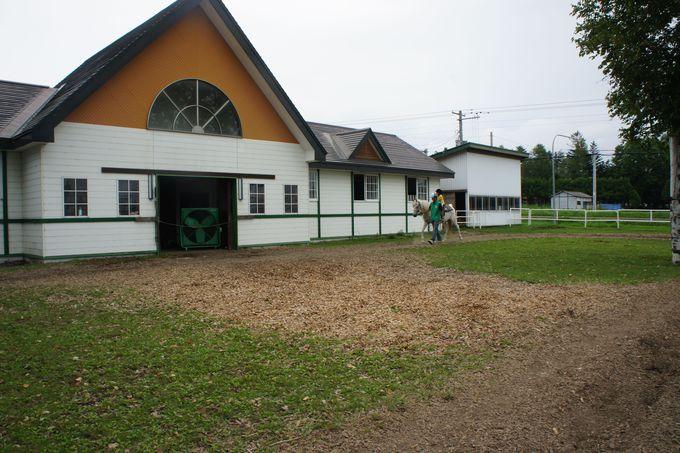 北海道の自然に囲まれて、引き馬、乗馬体験