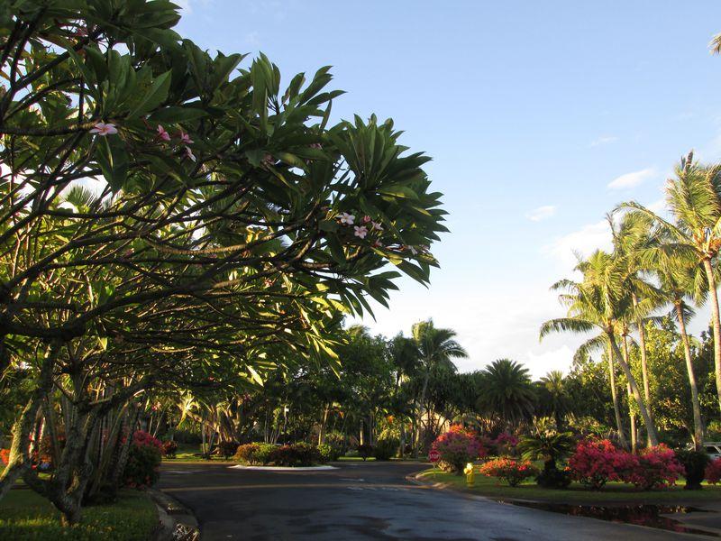 ハワイも格安に!話題のAirbnbで「暮らすバケーション」を楽しむ