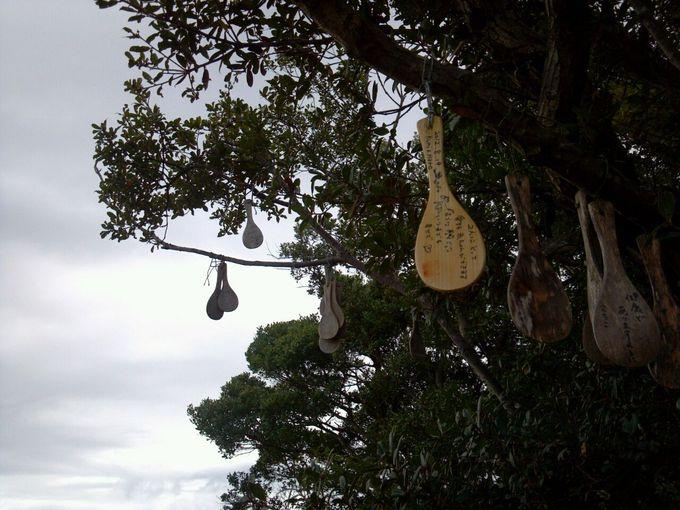 木に何かぶら下がっている・・・いや、これしゃもじ!!