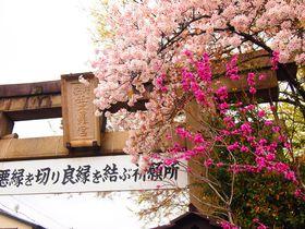 桜が美しい春の京都「安井金比羅宮」悪縁を切り良縁祈願!