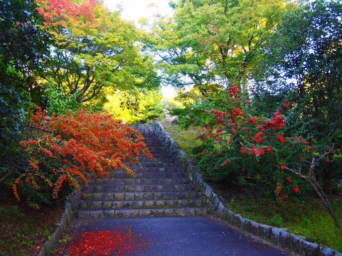 紅葉の穴場・東の庭&西の庭