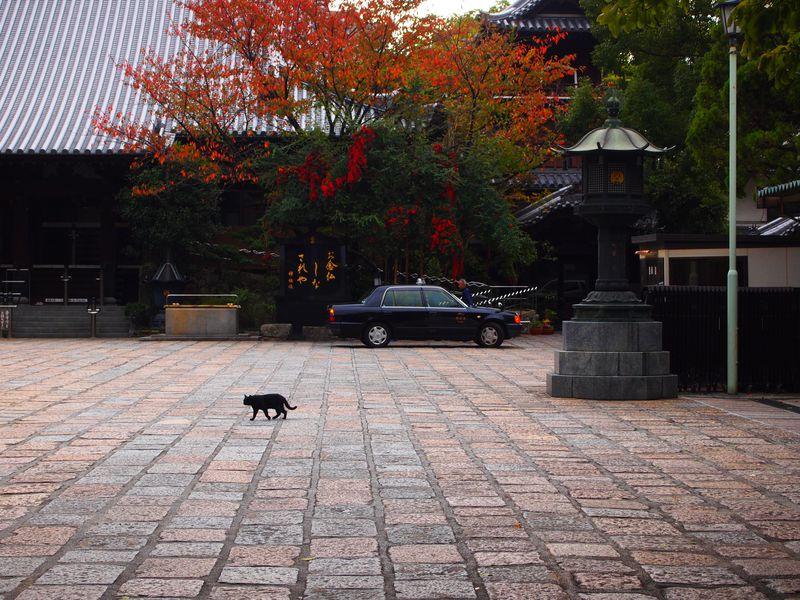 受付猫がいる!見所いっぱい博多「萬行寺」で癒されよう!