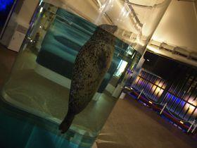 昼とはまた違う!夜の京都水族館の可愛い「いきもの」たちに会いに行こう!