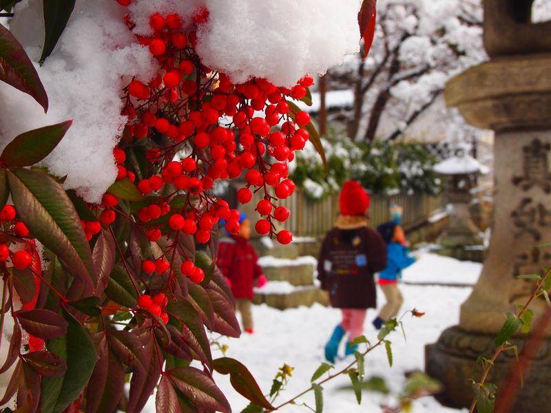 京都は冬こそ訪れたい!南天も素敵な雪の花咲く真如堂