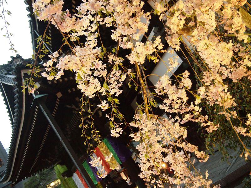 池坊の豪華な「いけばな」とともに!京都・六角堂夜の特別拝観