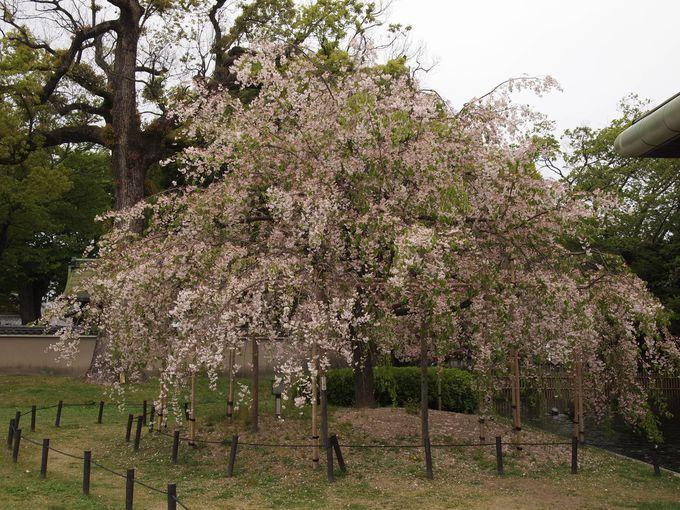 最後の花見?4月の弘法さんの縁日