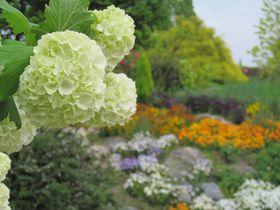 琵琶湖の絶景と花々!びわ湖大津館イングリッシュガーデン