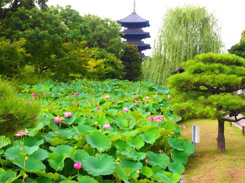 蓮の花の無料拝観も!夏の京都・東寺で爽やか早朝拝観のススメ