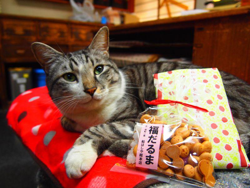 看板猫がいるお店!京都名物・五色豆「船はしや」可愛いシロ店長に会いに行こう!