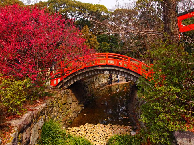 京の梅の絶景名所「二条城」「下鴨神社」「京都城南宮」