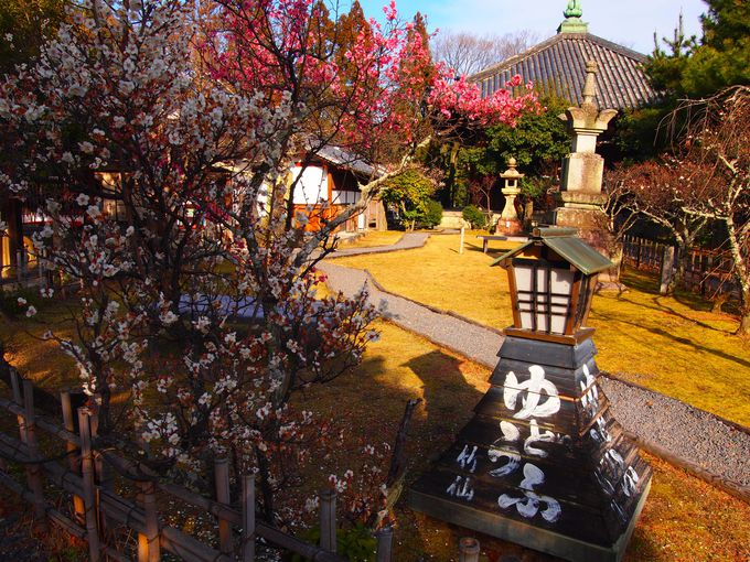 清凉寺の梅