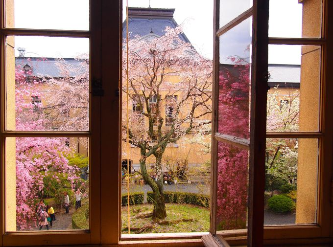 窓越しに見るとまた美しい