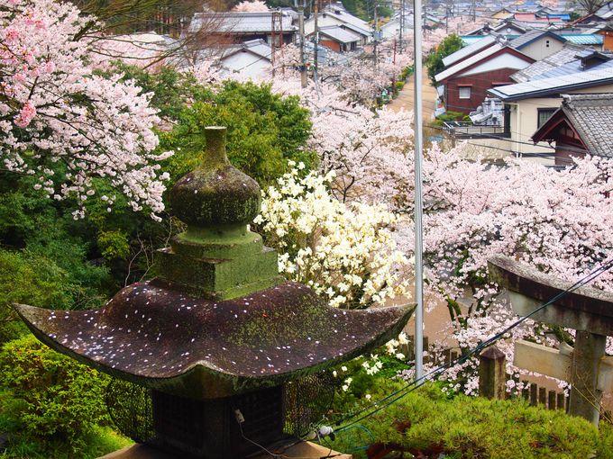 桜咲く宿場町