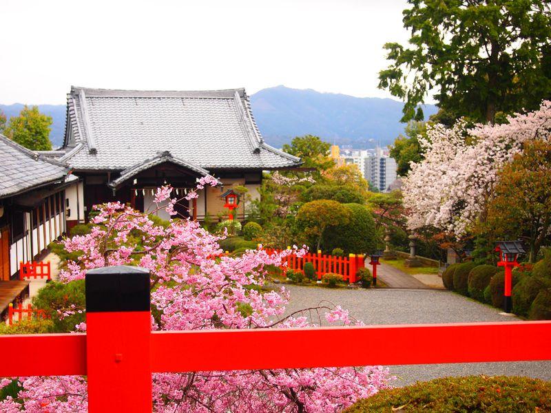 織田信長公を祀る京都・船岡山「建勲神社」の美しい桜と東山の眺望!