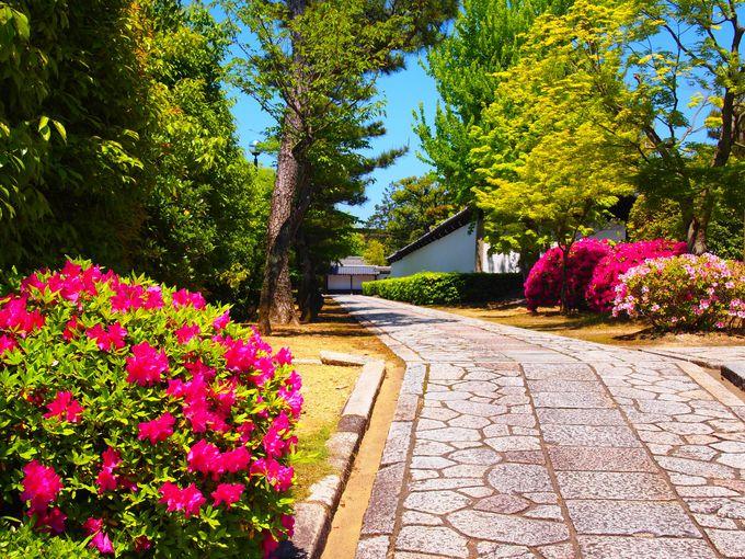 花の名所「智積院」