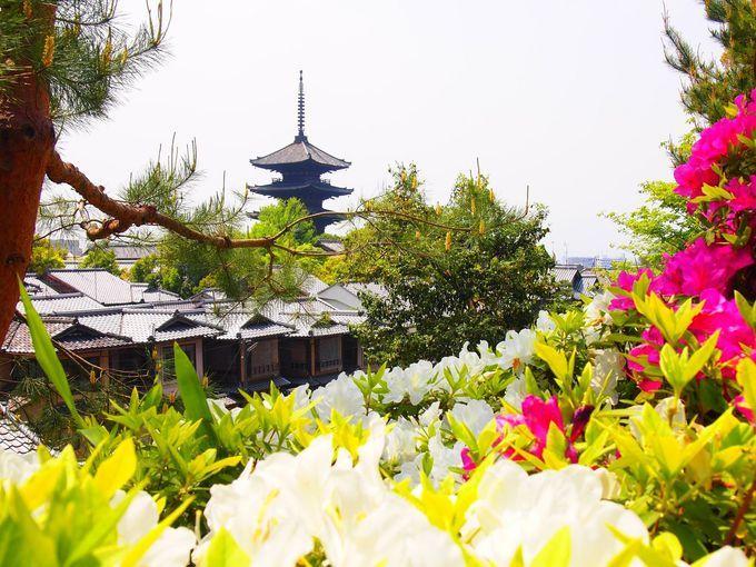 ぜーんぶ無料!新緑の京都で楽しむサツキとツツジの名所5選
