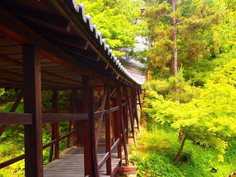 清水寺から徒歩15分:高台寺