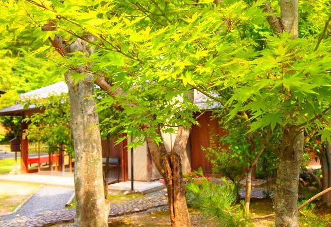 緑に囲まれた「雲居庵」