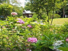 京都・旧三井家下鴨別邸で至福の喫茶タイム!特別公開に四季の花々