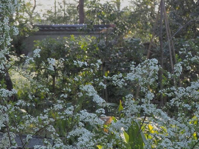 6月はあじさい苑、庭園の四季の風情は必見!