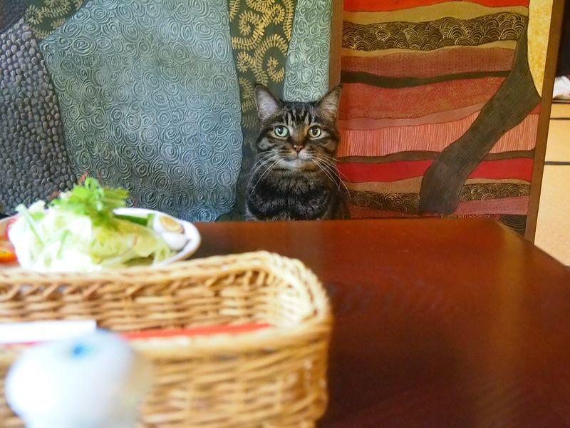 猫猫寺のご飯。