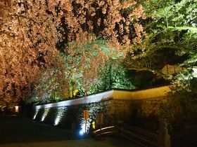 石垣と桜の光景は圧巻!滋賀県「三井寺」春のライトアップ