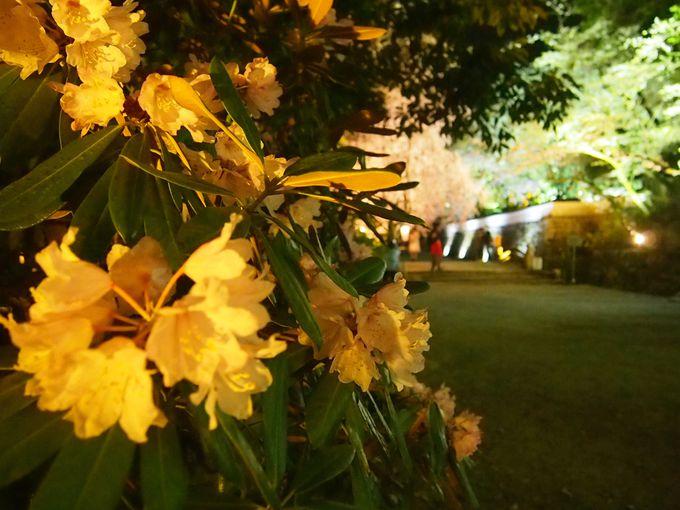 村雲橋周辺の桜