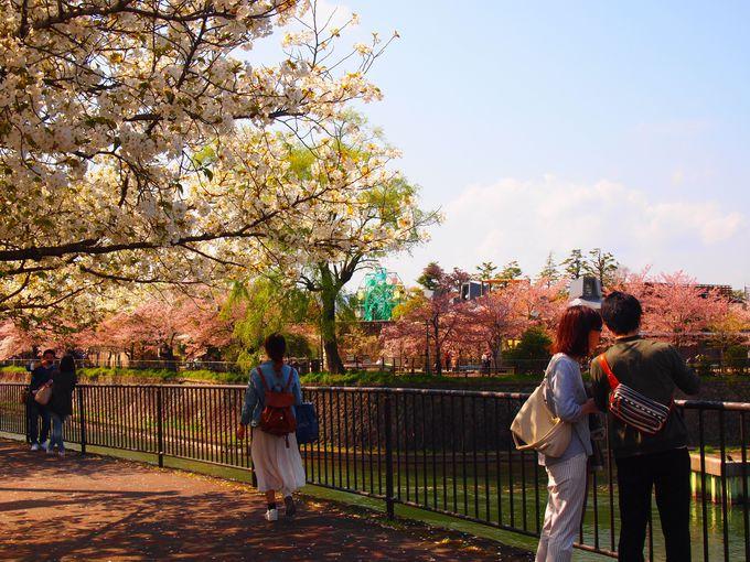ほのぼの動物園と噴水の眺め