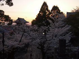 夕日に染まる町並みと桜が美しい!京都「金戒光明寺」