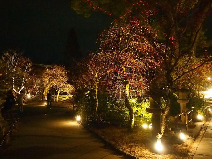 神秘的な夜の境内