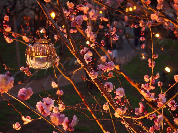 夕暮れ時の梅