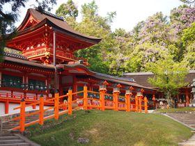 新緑と藤が美しい奈良「春日大社」は特別参拝がおすすめ!