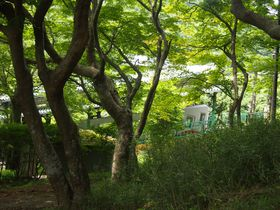 比叡山麓の美景!夏の京都おすすめスポット・八瀬もみじの小径