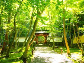 爽やか夏の緑に癒される!京都洛西・竹の寺「地蔵院」