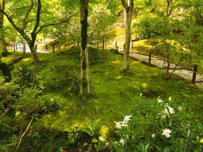 緑が美しい百花苑