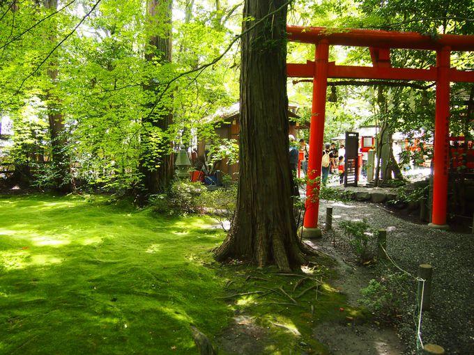 美しい苔の庭
