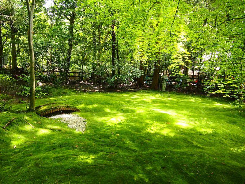 まるで緑のじゅうたん!京都・嵯峨野「野宮神社」苔庭