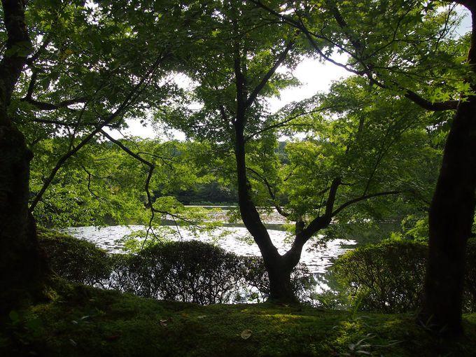 緑美しい龍安寺の境内