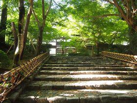 京都夏の「龍安寺」で爽やか水景色と緑の光景を堪能しよう!