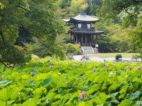 夏の緑と氷室池の蓮が美しい!京都・山科「勧修寺」