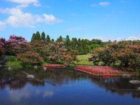 鮮やかサルスベリ!京都・梅小路公園「朱雀の庭」