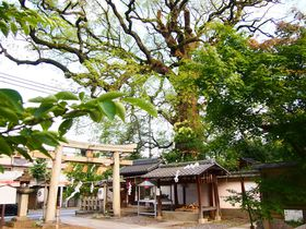 間近で見上げる大樟が見事!京都「新熊野神社」